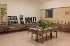 2-Mostra-muschi-e-fiori-piante-rare