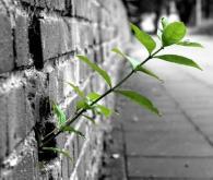 Abitare la speranza